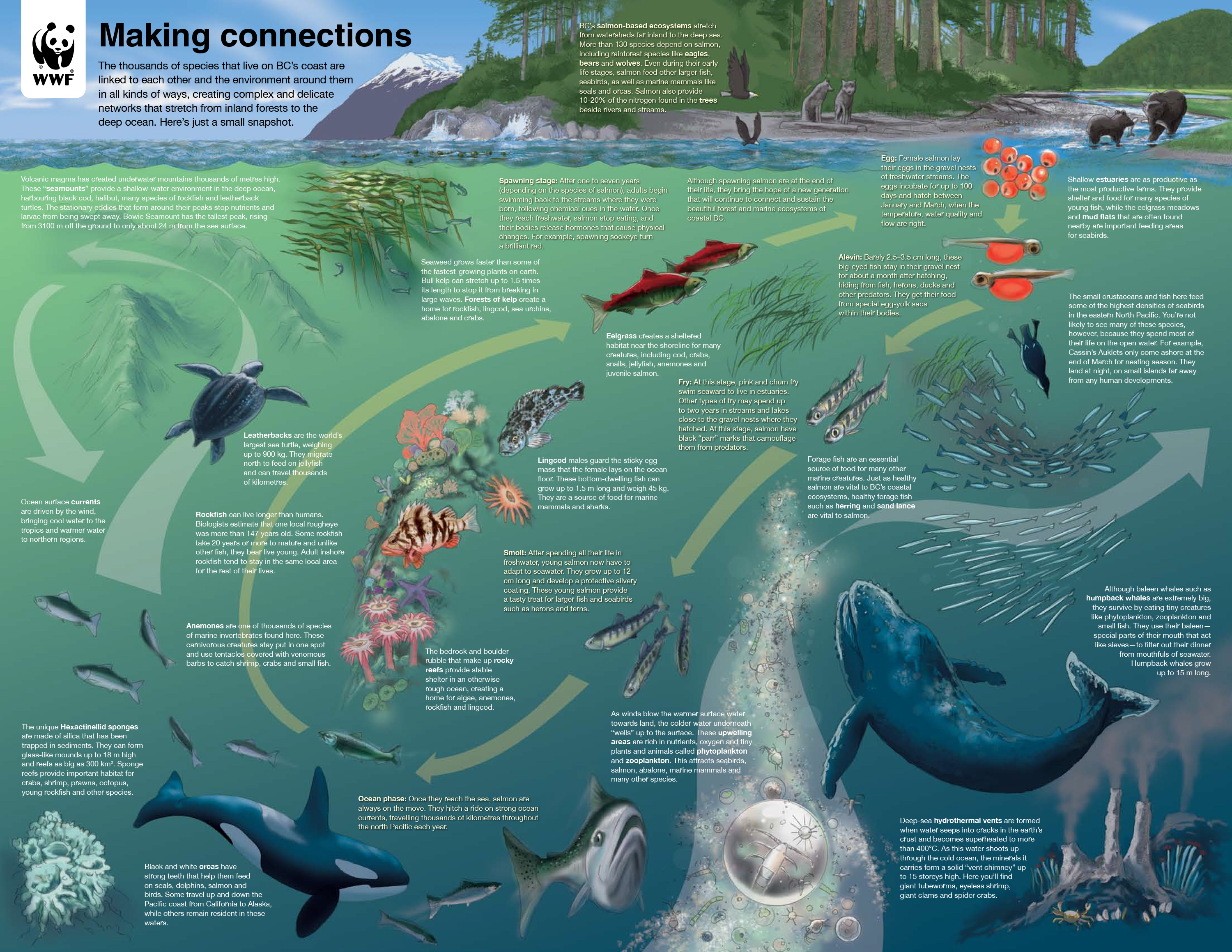 WWF BC Marine Life Cycle Diagram