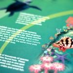 WWF poster detail - rockfish