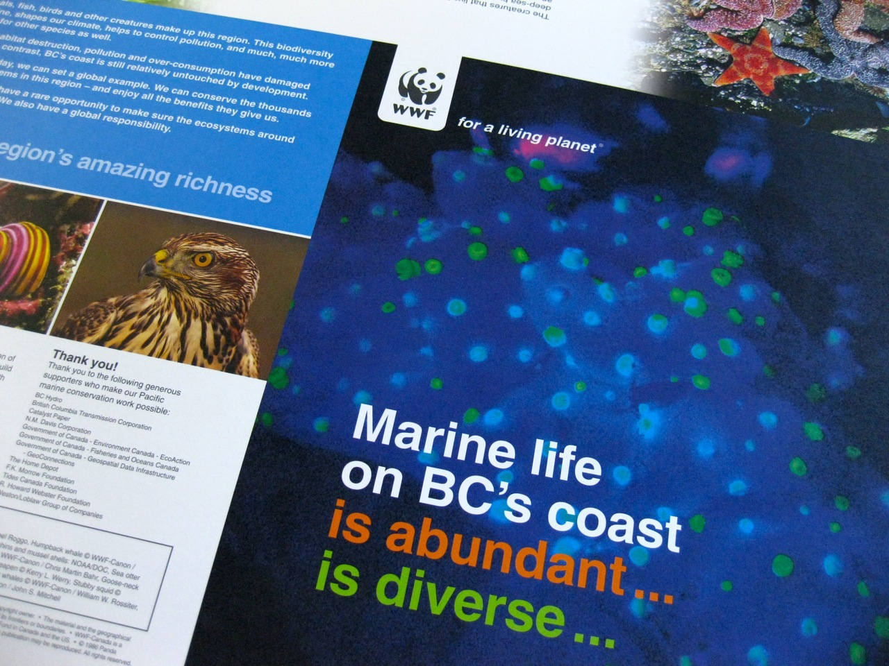 WWF poster - brochure