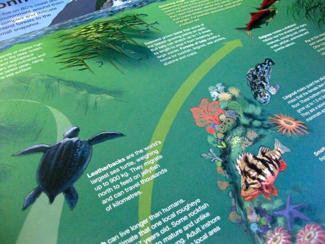 WWF poster detail - leatherback turtle