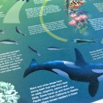 WWF poster detail - Orca