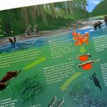 WWF poster detail - salmon